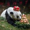 В Китае умерла самая старая в мире большая панда