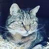 Коты выступают против выхода Великобритании  из Евросоюза
