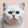 Японец совершил 32 кражи, чтобы накормить кошек