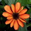 На борту МКС впервые распустился цветок