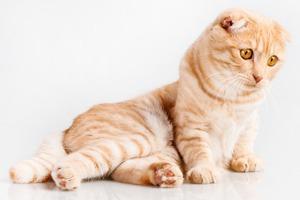 Кот, проданный вместе  с матрасом, вернулся домой