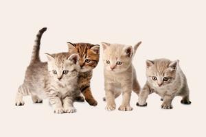 Видео дня: Хозяин пытается усадить перед камерой десять котят