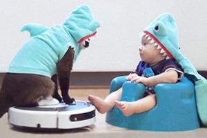 Кот на «румбе» и младенец — в костюмах акулы