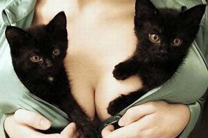 Коты, кошки и котята тоже любят женскую грудь, особенно большую