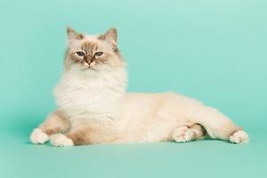 Странное кошачье диско  из 1970-х