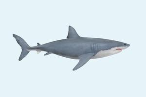Замёрзшие акулы: Как животные переживают погодные аномалии