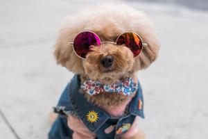 На кого подписаться: «Humans of New York» — только с собаками