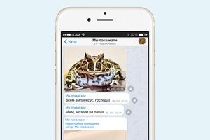 На кого подписаться: Телеграм гигантской лягушки «Мы поквакали»