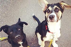 На кого подписаться в Instagram: Щенки из Сочи Джейк и Мишка