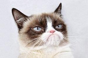 Grumpy Cat заговорит голосом Обри Плазы