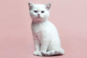 В ожидании кото: Демотиваторы из Беккета