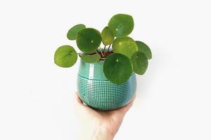 На кого подписаться: #plantparenthood — хештег о любви к растениям