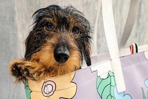 На кого подписаться: Пёс-модник Гектор