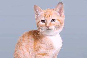 Видео дня: эволюция кошачьей красоты за 100 лет