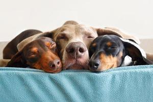 На кого подписаться: Инстаграм собачьего семейства