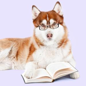 Библиотека на диване: 10 советов, которые помогут читать больше