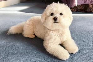 На кого подписаться: Счастливая собака Валерия Сюткина