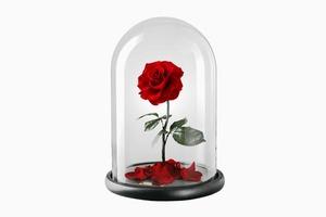 Роза из «Красавицы и чудовища»