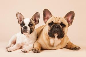 Учёные доказали,  что собаки понимают человеческую речь