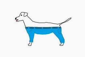 В интернете спорят, как собакам носить штаны