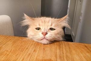 На кого подписаться: Кот-экзистенциалист Пончик