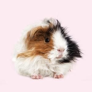Для носиков пёсиков: Полезная и приятная косметика для животных