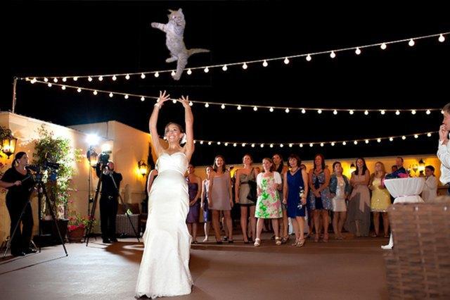 Блог Brides Throwing Cats про невест и летающих кошек. Изображение № 5.