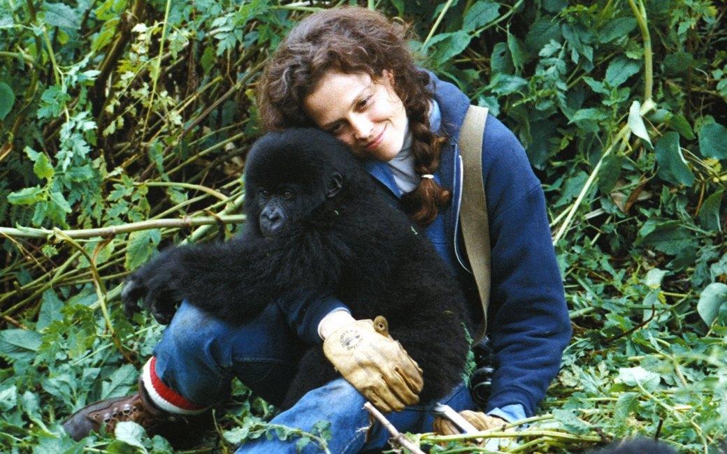 Похищение девушек гориллами фото 74-312