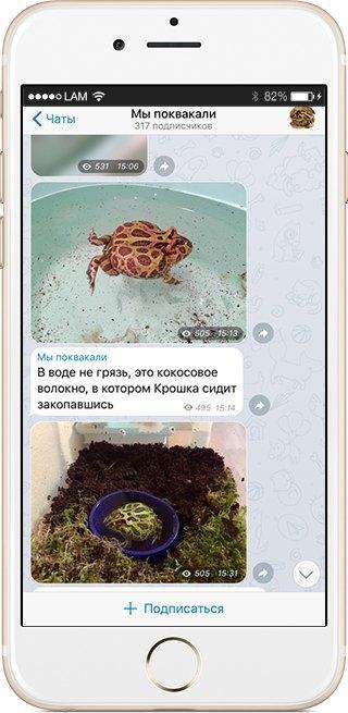 На кого подписаться: Телеграм гигантской лягушки «Мы поквакали». Изображение № 2.