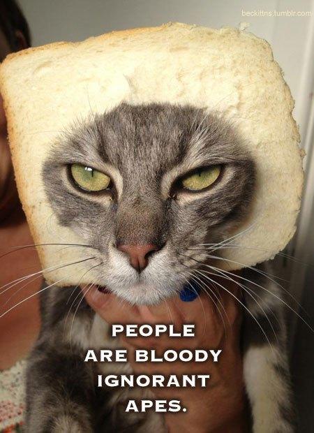 В ожидании кото: Демотиваторы из Беккета. Изображение № 10.