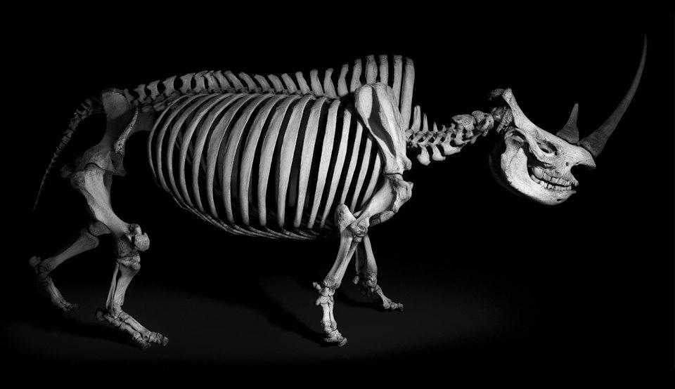 Белое на чёрном: Скелеты животных в фотоальбоме «Evolution» . Изображение № 1.