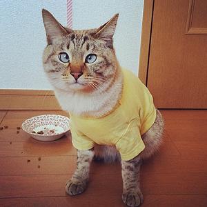 11 классных  звериных аккаунтов  в Instagram. Изображение № 19.