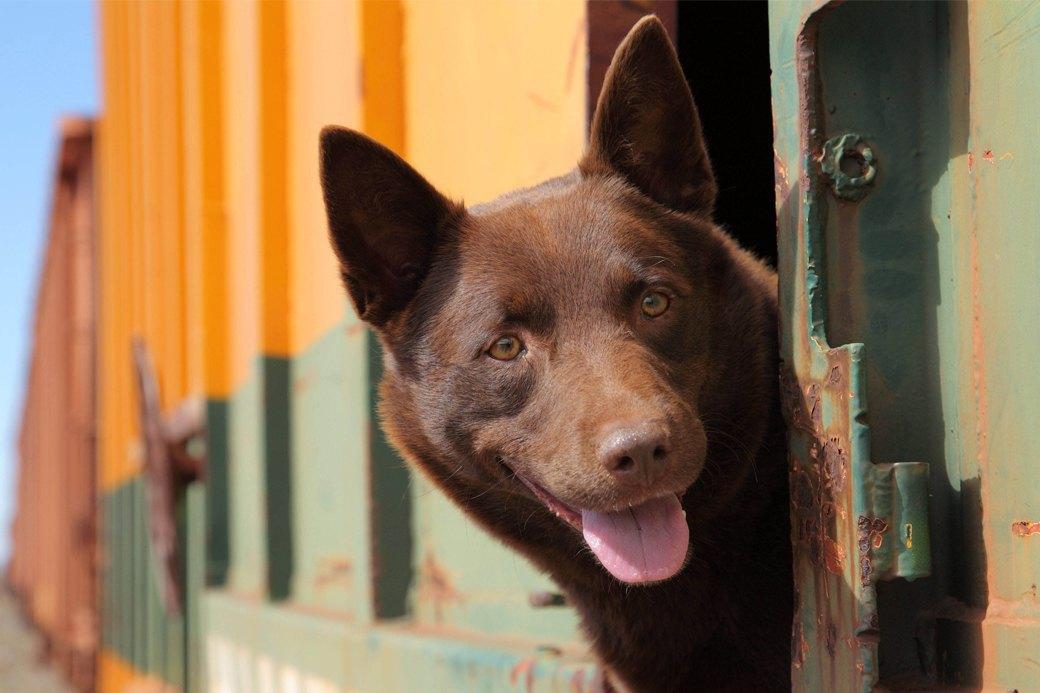 Верный друг: 10 фильмов с любимыми собаками в важной роли. Изображение № 9.