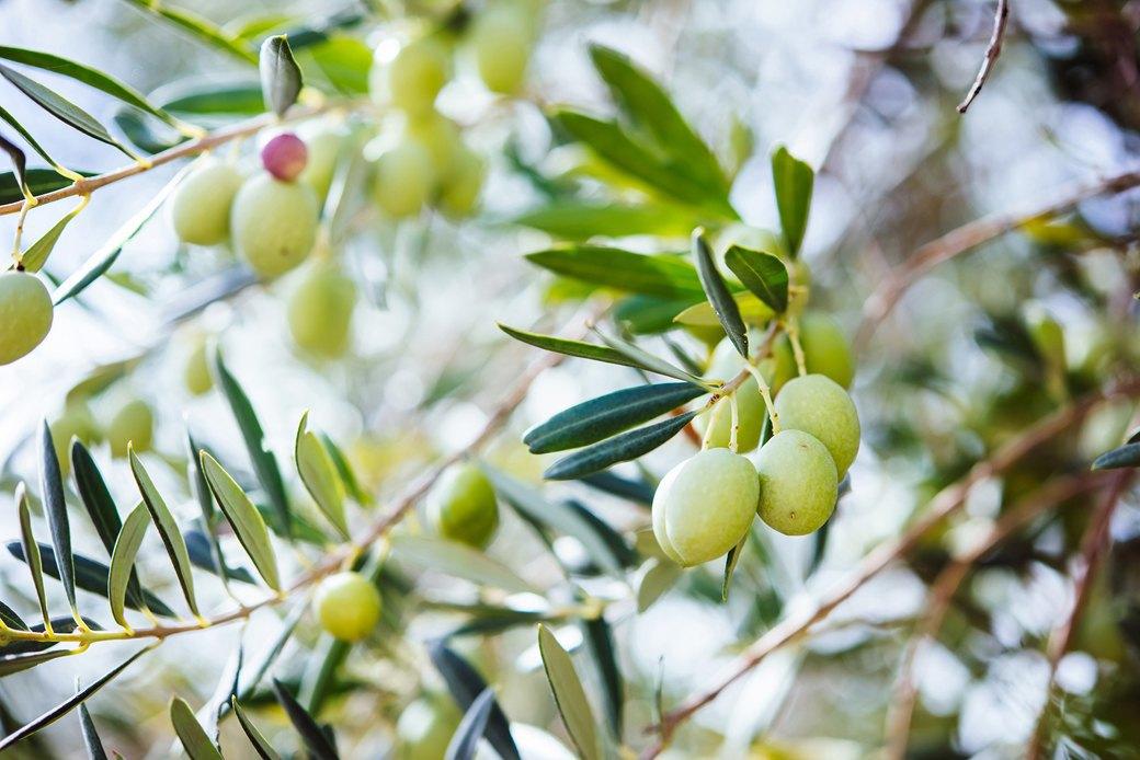 Осень в Италии:  Гастротуризм и сбор  олив на Сицилии. Изображение № 5.
