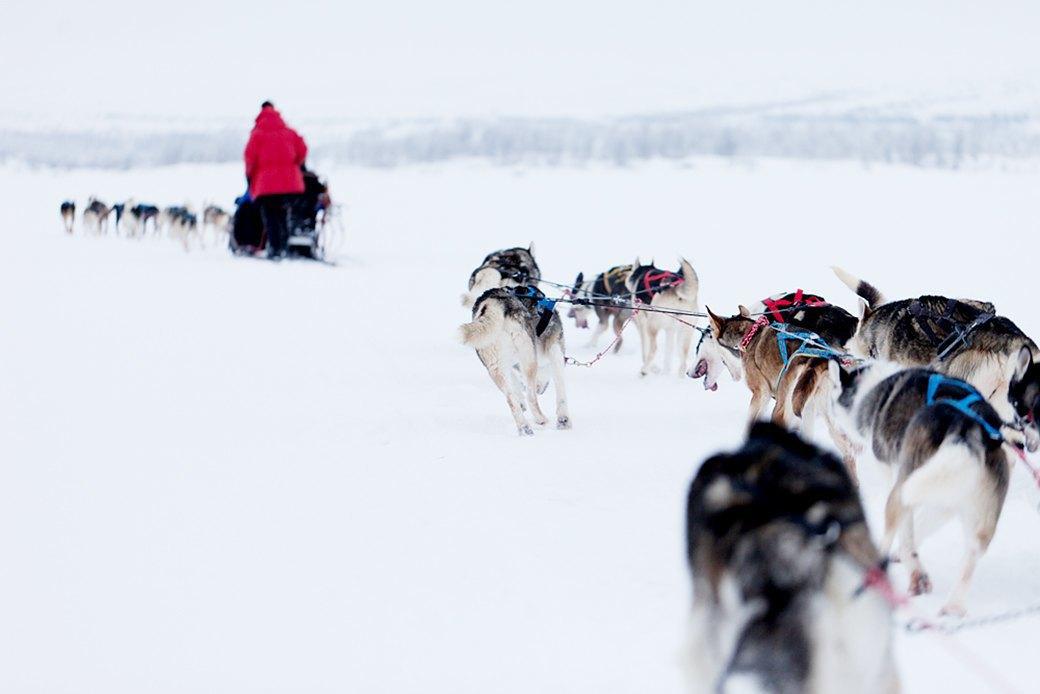 В гостях у хаски:  10 сказочных зимних путешествий. Изображение № 1.