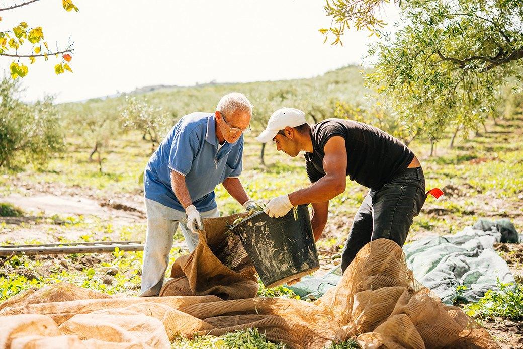 Осень в Италии:  Гастротуризм и сбор  олив на Сицилии. Изображение № 6.
