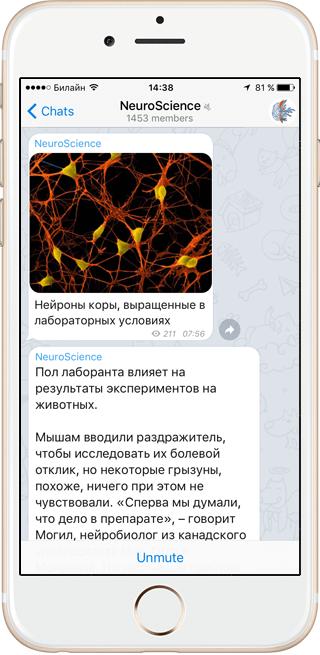 На кого подписаться: NeuroScience и другие каналы в Telegram . Изображение № 2.