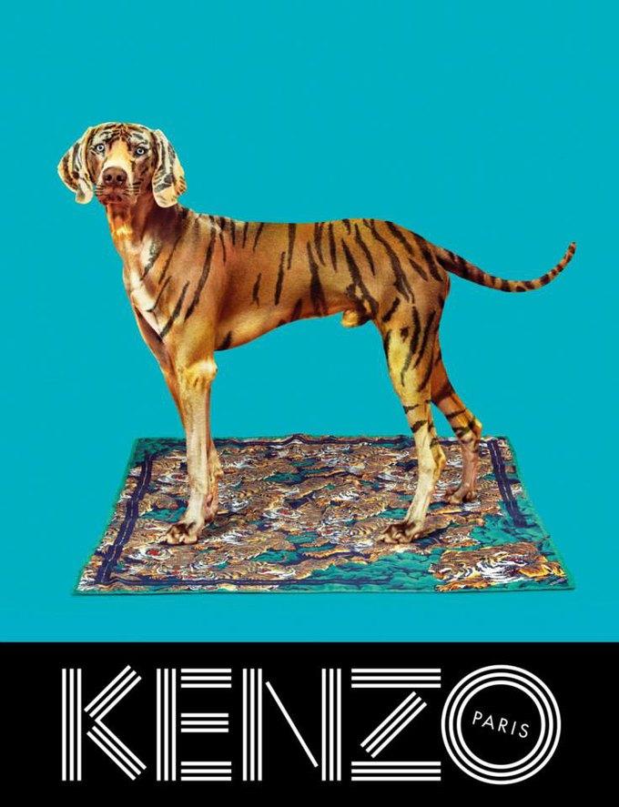Котики и глаза в новой кампании Kenzo. Изображение № 7.