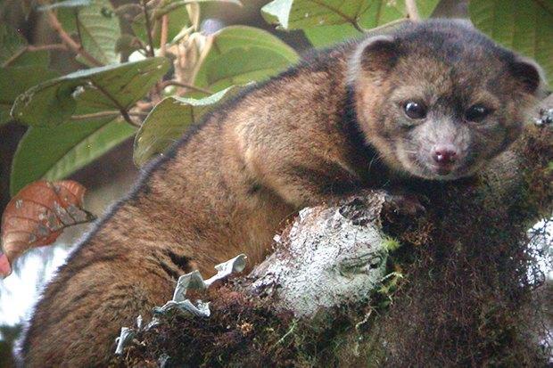 Как учёные находят новых животных: 8 недавно открытых видов. Изображение № 4.