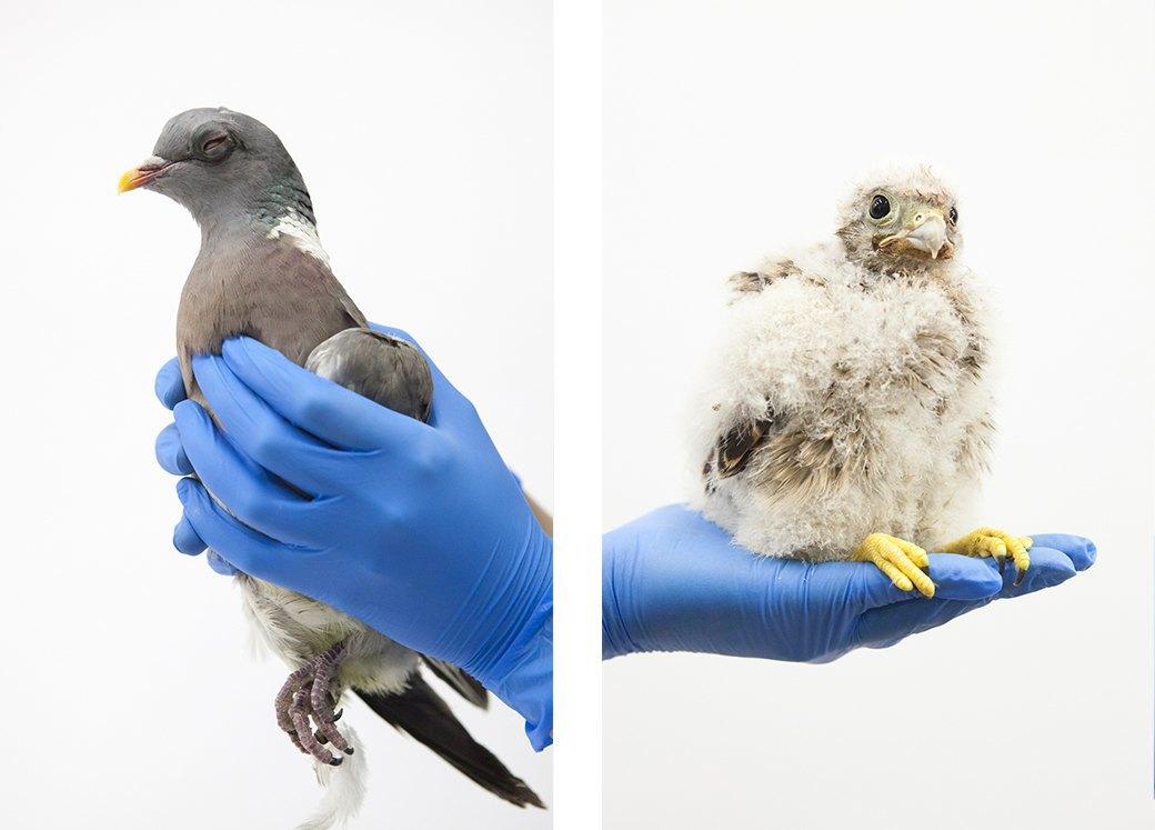 «Birds Don't Cry»: Сова, чайка и другие постояльцы приюта для птиц. Изображение № 9.