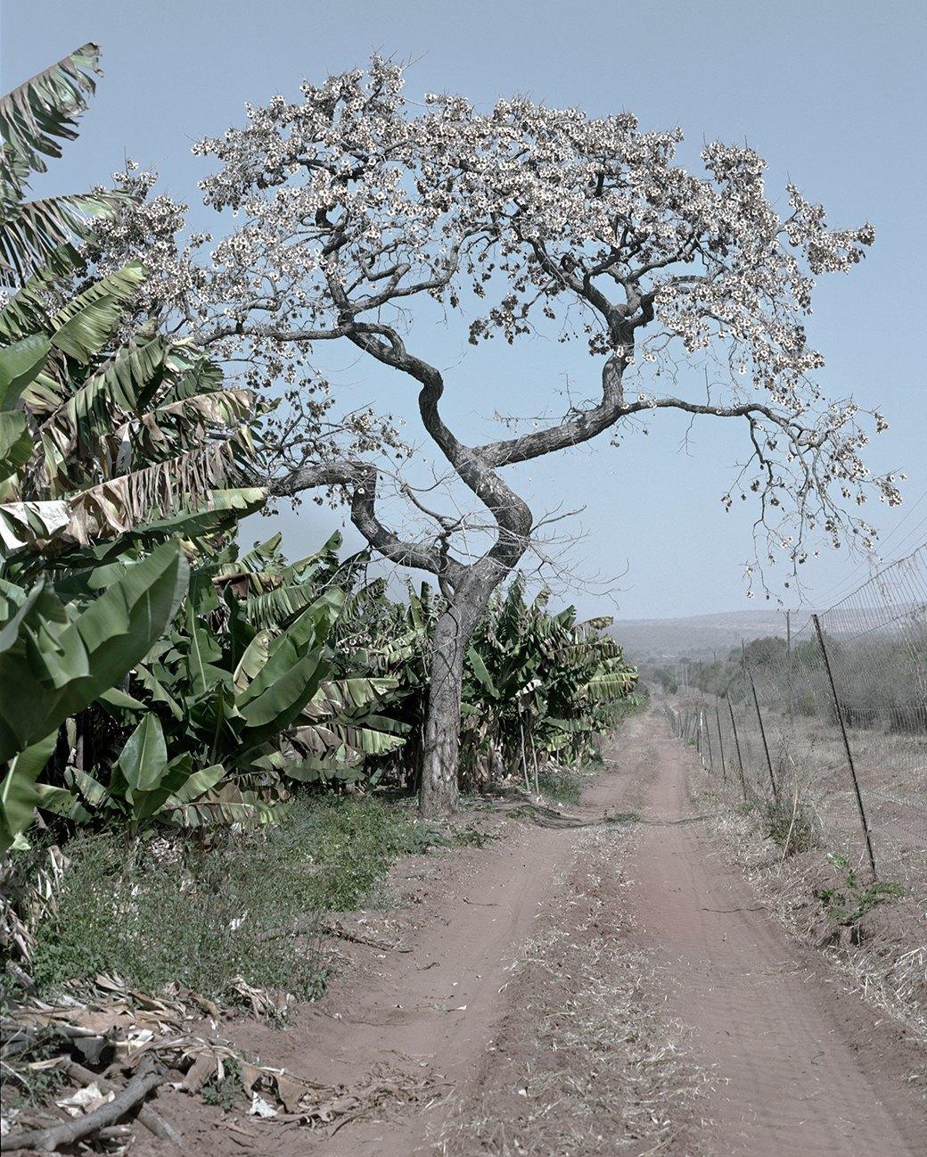 «Местность»: Обезличенный труд африканских крестьян. Изображение № 6.