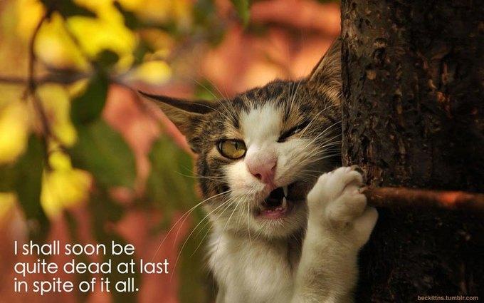 В ожидании кото: Демотиваторы из Беккета. Изображение № 3.