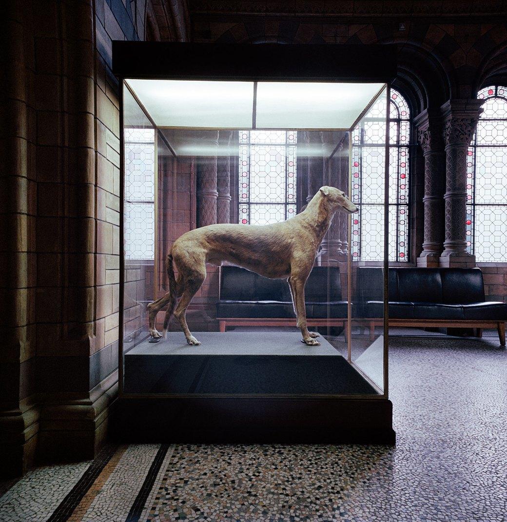 «Museology»:  Тайная жизнь  музейных экспонатов. Изображение № 4.