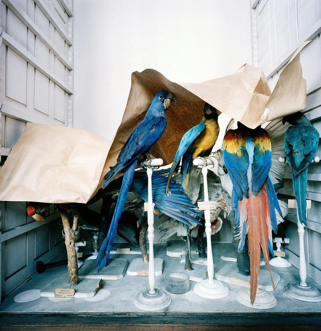«Museology»:  Тайная жизнь  музейных экспонатов. Изображение № 8.