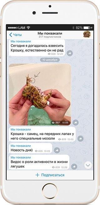 На кого подписаться: Телеграм гигантской лягушки «Мы поквакали». Изображение № 4.