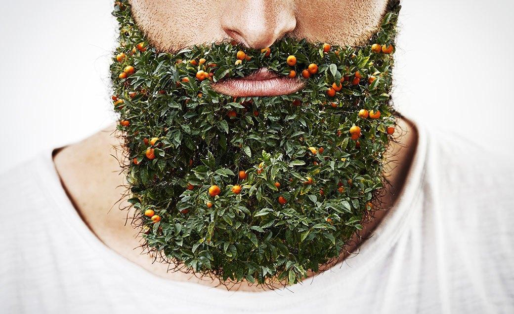 Борода —всему голова. К тому же в ней всегда можно найти что-то съедобное. Изображение № 2.