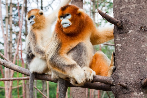 Как учёные находят новых животных: 8 недавно открытых видов. Изображение № 1.