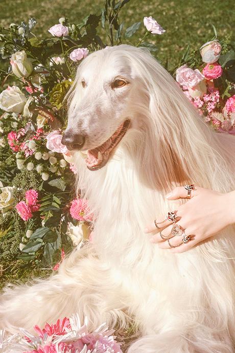 Новая кампания Gucci с умилительными псами. Изображение № 15.