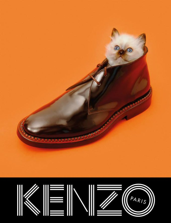 Котики и глаза в новой кампании Kenzo. Изображение № 5.