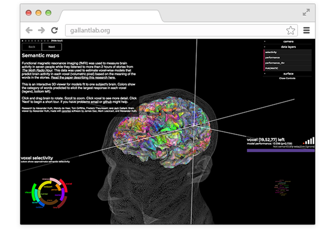 В закладки: Виртуальная семантическая карта мозга. Изображение № 1.